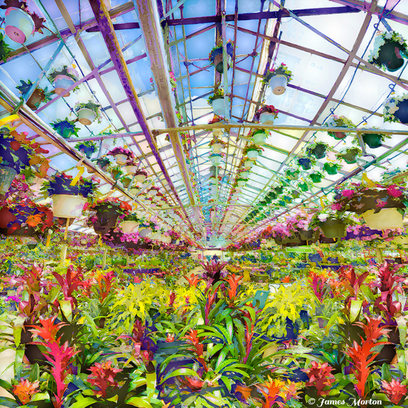 Bromeliad Symphony Bromeliads Blooming In A Greenhouse Digigraph Print